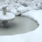 The Pond at Focus HQ